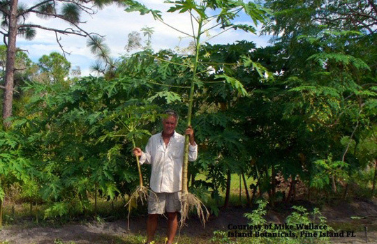 Fertilizer Boosters for Plants | BioWash Fertilizer Boosters